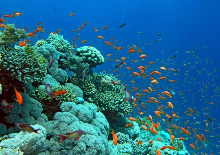 Gulf_Of_Aqaba_Corals