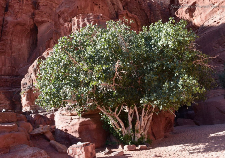 wadi_rum_jordan_2